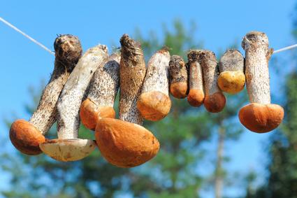 Sunshine or Mushrooms for vitamin D?