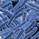 Microbiota and Your Mood